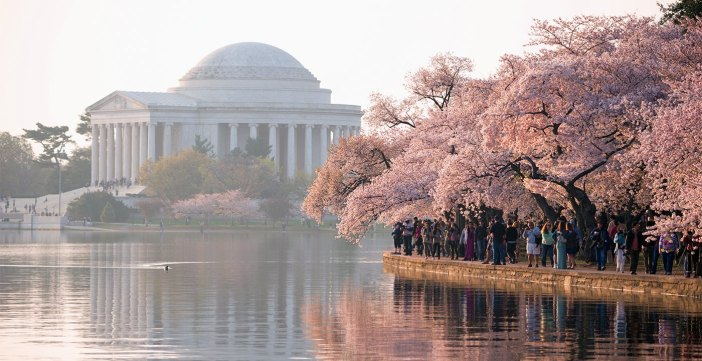 Nation's Capital in Bloom